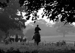 Sepia image of autumn hunting in Badminton Park with the Duke of Beauforts Hounds. Limited Edition canvas in 2 sizes (50 in each edition)